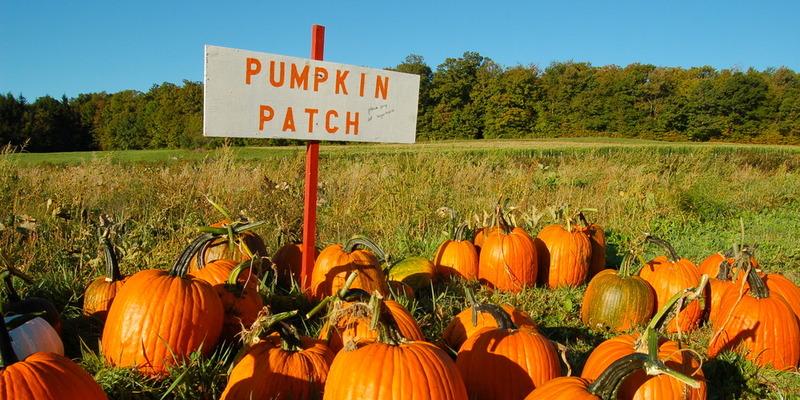 pumpkin patch halloween date ideas